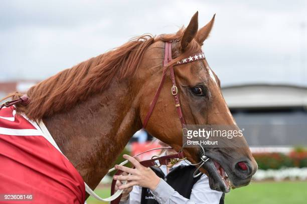 Gailo Chop after winning the Carlton Draught Peter Young Stakes at Caulfield Racecourse on February 24 2018 in Caulfield Australia