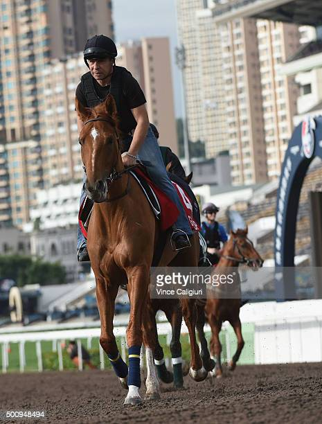 Gailo Chop from France gallops on the All Weather Track during a trackwork session at Sha Tin Racecouse on December 11, 2015 in Hong Kong, Hong Kong.