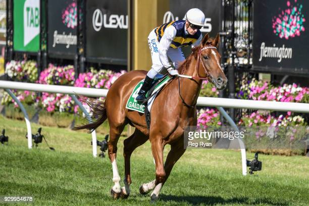Gailo Chop ridden by Mark Zahra heads to the barrier before the TAB Australian Cup at Flemington Racecourse on March 10 2018 in Flemington Australia