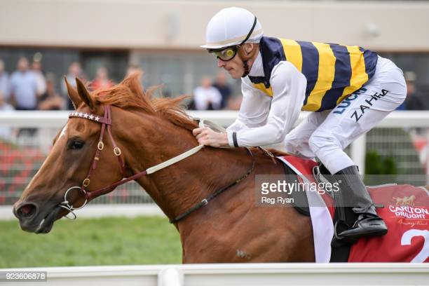 Gailo Chop ridden by Mark Zahra wins the Carlton Draught Peter Young Stakes at Caulfield Racecourse on February 24 2018 in Caulfield Australia