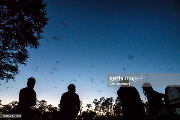 Gainesville, University of Florida, Evening cave bat flight with spectators.