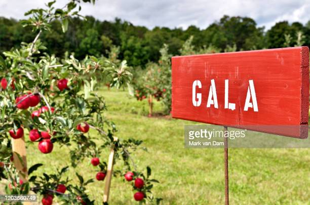 gala apple species signs at a pick your own fruit orchard - ontario canada stock pictures, royalty-free photos & images