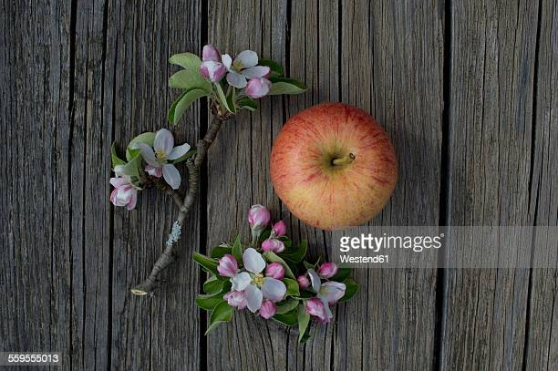 gala royal apple and blossoms on wood - royal gala apple stock photos and pictures