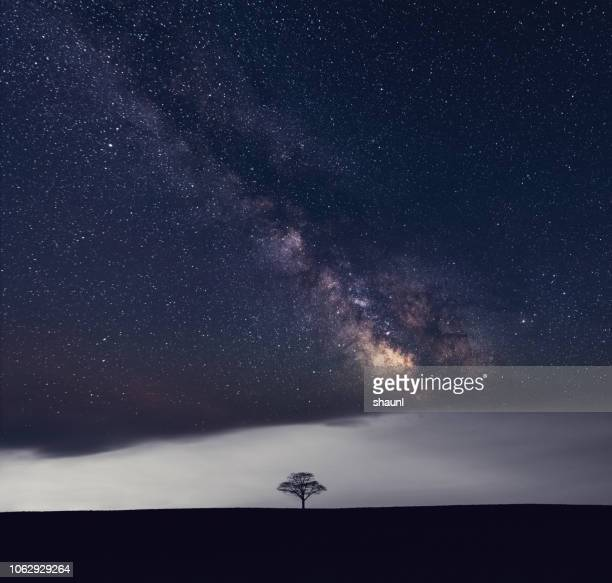 galactic solitude - single tree stock pictures, royalty-free photos & images