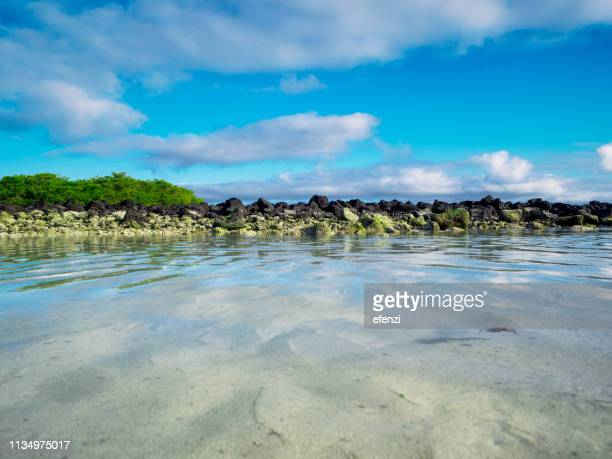 galapagos beach at tortuga bay - santa cruz island galapagos islands stock pictures, royalty-free photos & images