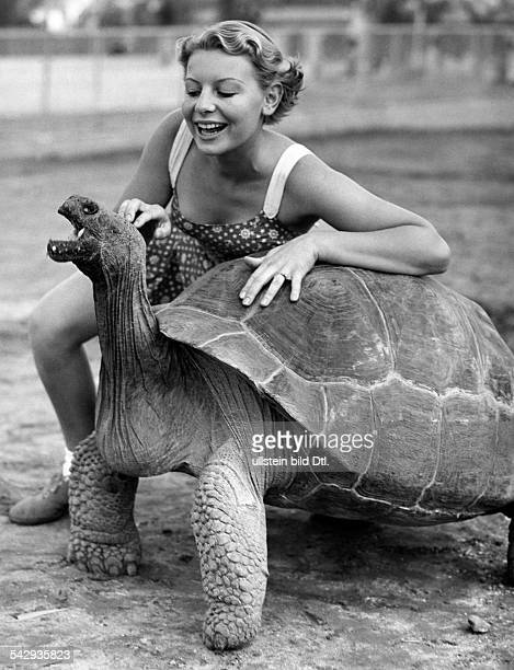 Galapagos tortoises A movie actress with a Galapagos tortoise in the San Diego Zoo 1937 Vintage property of ullstein bild