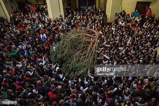 'Galejadors' carry the selected pine inside the church during 'La Festa del Pi' in the village of Centelles on December 30 2015 in Barcelona Spain...