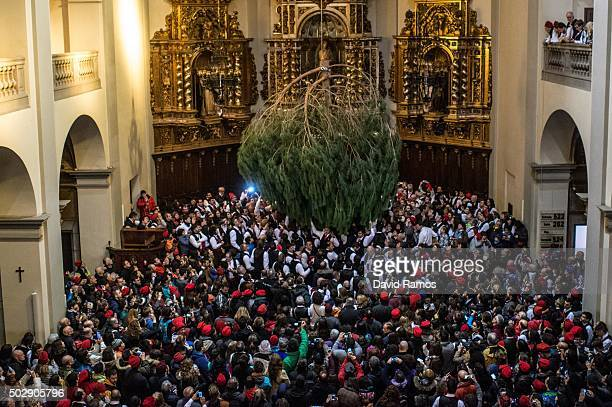 'Galejadors' dance beneath the selected pine tree inside the church during 'La Festa del Pi' in the village of Centelles on December 30 2015 in...