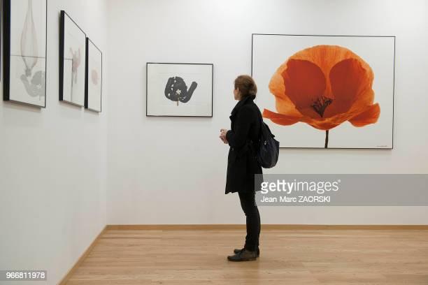 Galerie de l'exposition des oeuvres de Denis Brihat photographe français de nature morte lauréat du prix Niépce en 1957 et professeur de photographie...