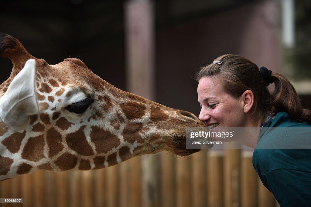 Baby Giraffe Meets Its Public At Ramat Gan Zoo : News Photo