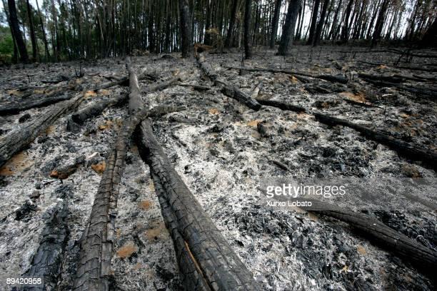 Galicia Fire in the forest Abegondo La Coruna