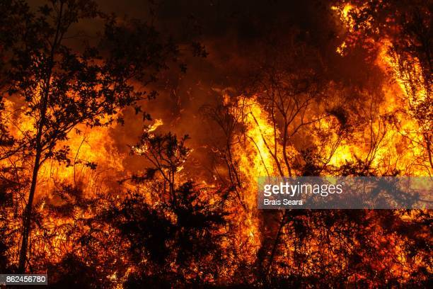 galicia fire - forest fire stock pictures, royalty-free photos & images