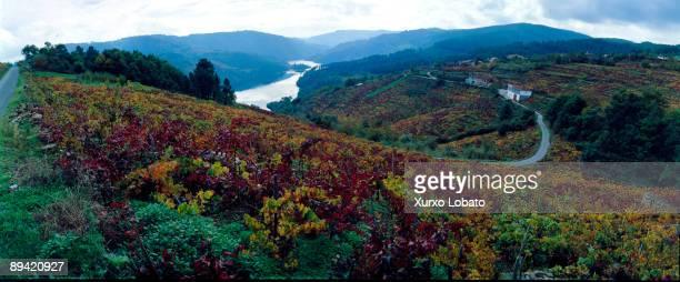 Galicia Ribeira Sacra Vineyards