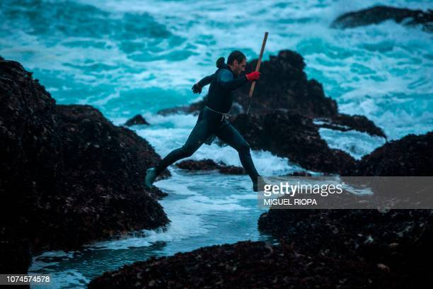 Galician fisherman jumps over rocks as he looks for goose barnacles at the Roncudo Cape next to the village of Corme, northwestern Spain, on December...