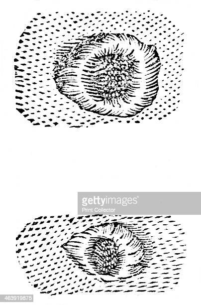 Galileo's drawing of lunar craters Galileo Galilei Italian mathematician astronomer and physicist made the first effective working telescope in 1609...