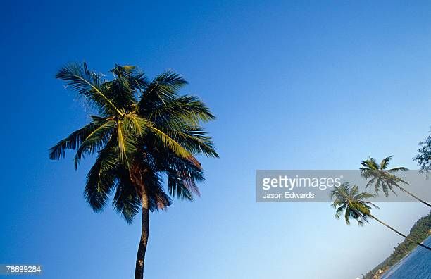 Sun drenched Palm Trees reach into a clear blue tropical sky.