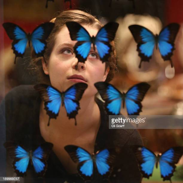 A gallery assistant at Bonhams auction house admires an antique fire screen featuring a display of Blue Mountain Swallowtail butterflies which is...