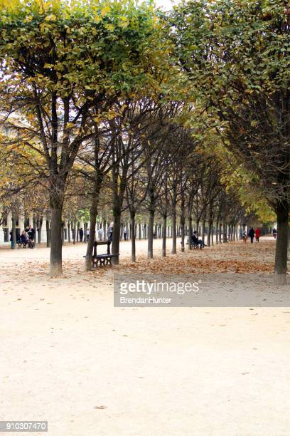 gallery of trees - palais royal stock pictures, royalty-free photos & images