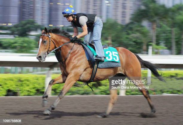 ORANGE gallop on the all weather track at Sha Tin 29JUN15