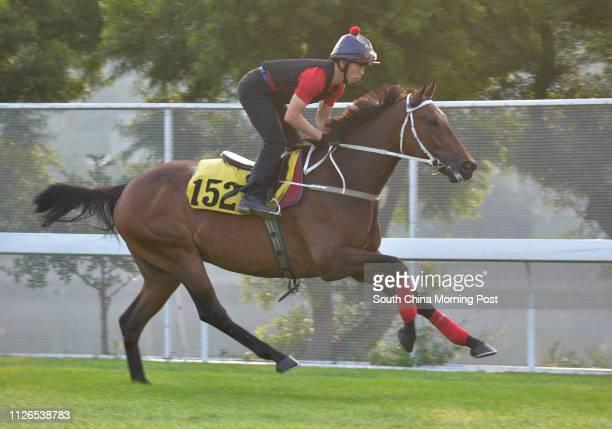 STAR gallop on the turf at Sha Tin 06NOV14