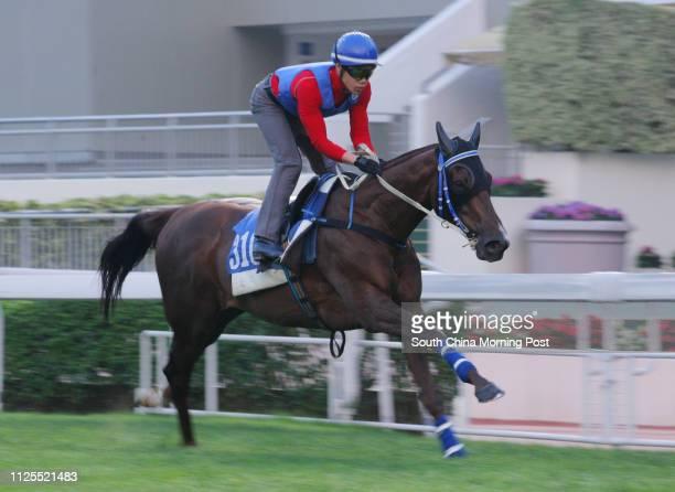 SPIRIT gallop on the turf at Sha Tin on 01May13