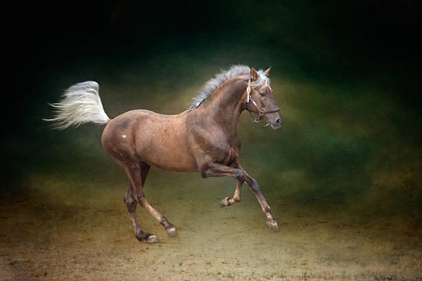 Galloping Horse Wall Art