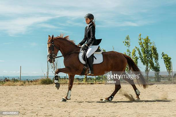 galloping horse - dressage stock pictures, royalty-free photos & images