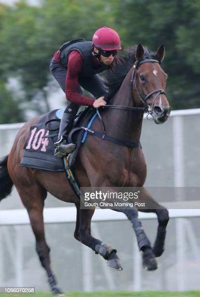 STAR galloping on the turf at Sha Tin 04FEB16