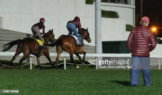 PARAGON galloping on the turf at Sha Tin John Moore looking at the horses 17MAR16