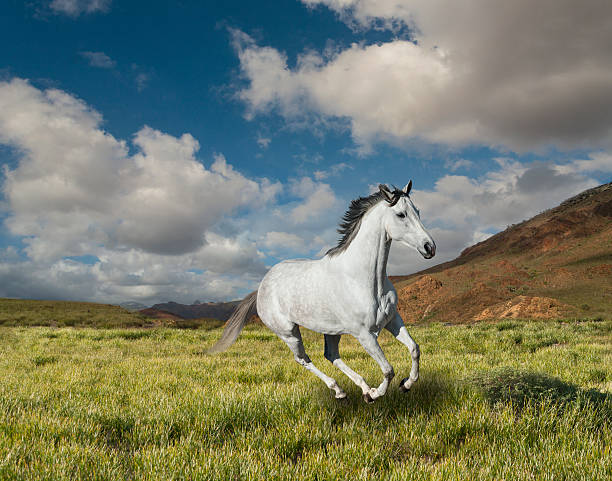 Galloping White  Horse Wall Art
