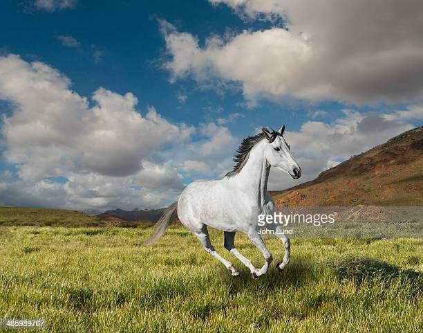 galloping white  horse - 一匹 ストックフォトと画像