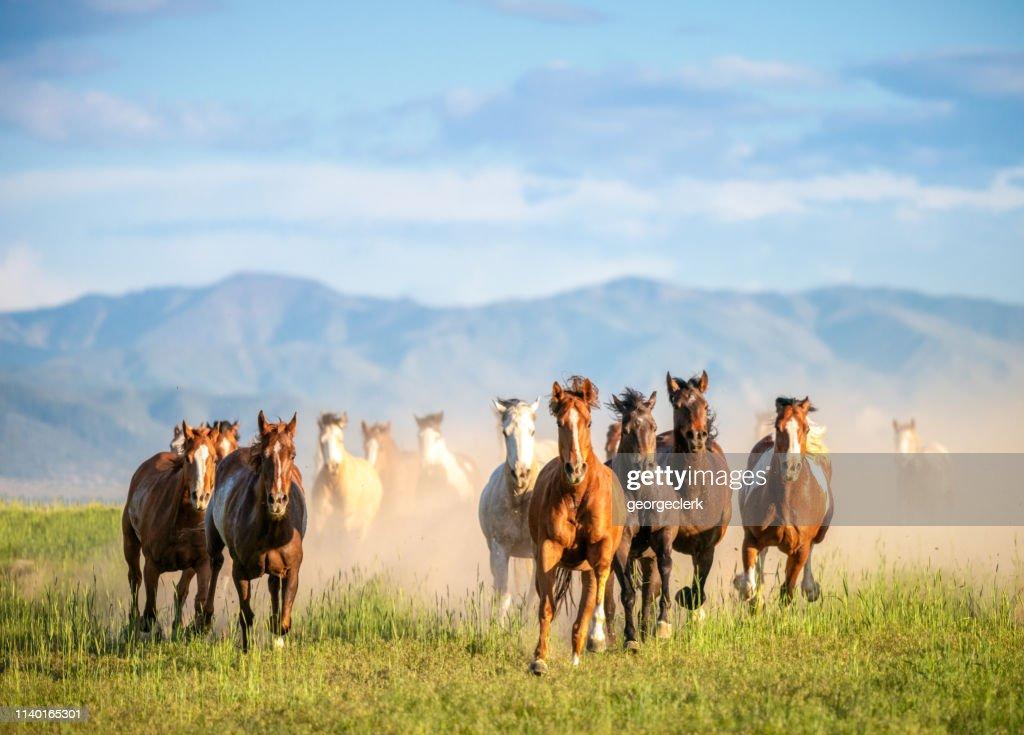 Cavalli selvaggi al galoppo nel deserto : Foto stock