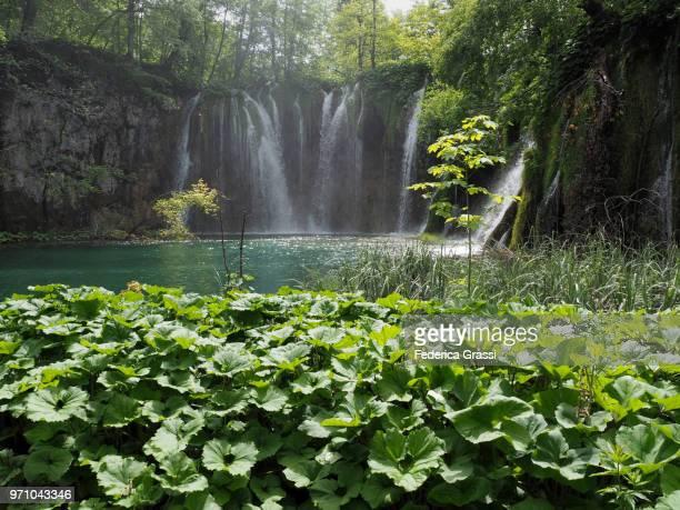 galovacki buk waterfall, plitvice lakes national park - pianta acquatica foto e immagini stock