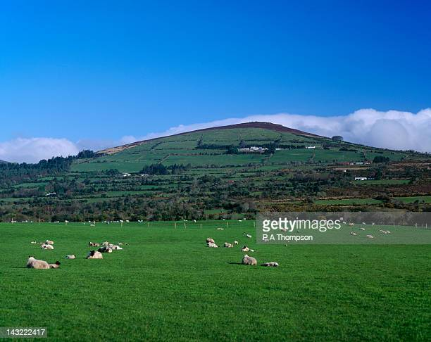 Galtymore Mountain, County Tipperary, Ireland