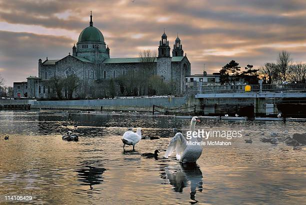galway cathedral and swans - county galway stock pictures, royalty-free photos & images
