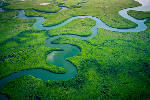 Gambia Mangroves. Aerial view of mangrove forest in Gambia. Photo made by drone from above. Africa Natural Landscape. 1190336132