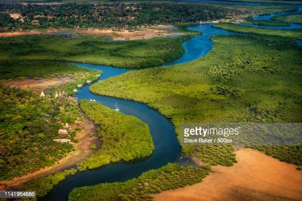 gambia river - gambia stock photos and pictures