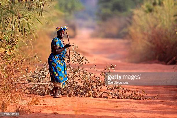 Gambia. Woman collecting branches on dirt road.