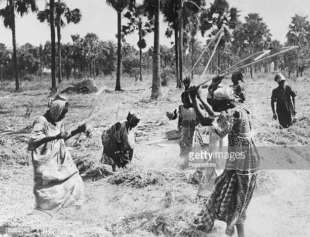 People Africa Gambia Kombo Province Agriculture pic circa 1940's Gambian women working on the land threshing groundnuts the principal export using...