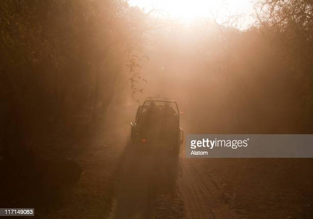 game drive in the jungle - bandhavgarh national park stock pictures, royalty-free photos & images