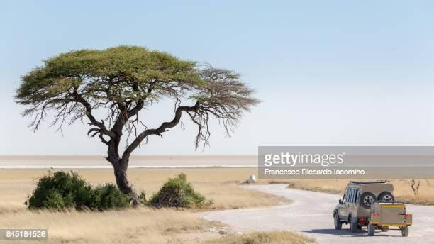 Game drive safari in Etosha, Namibia