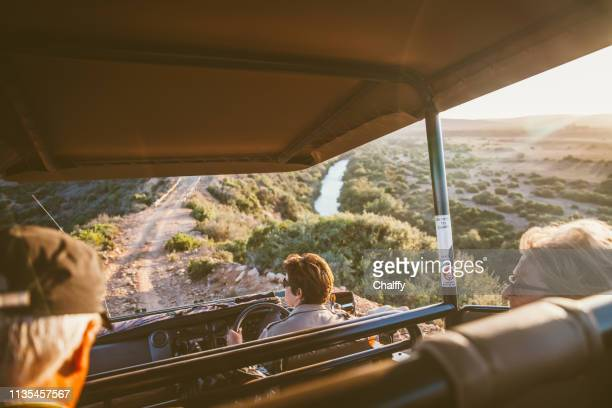 game driving in safari - kruger national park stock pictures, royalty-free photos & images