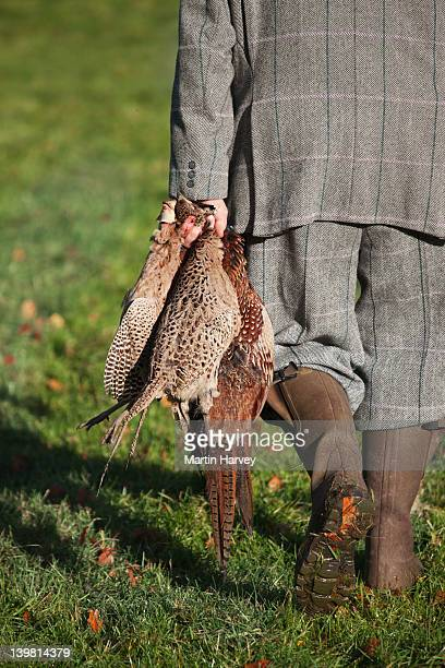 Game Keeper holds two Red-legged Partridges (Alectoris rufa) and a Ring-necked pheasant (Phasianus colchicus). Scotland, UK