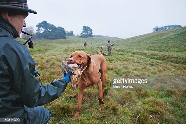game keeper (45 years old) with vizsla pointer (canis lupus familiaris) carrying a red-legged partridge (alectoris rufa) that has been shot by the hunters during an organized hunt. scotland, uk - 45 49 anni foto e immagini stock