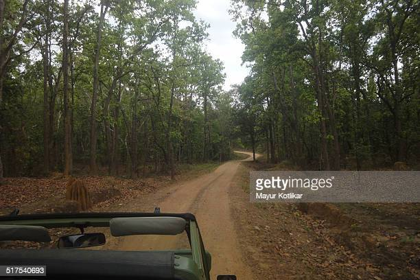 game park safari bending road - madhya pradesh stock photos and pictures