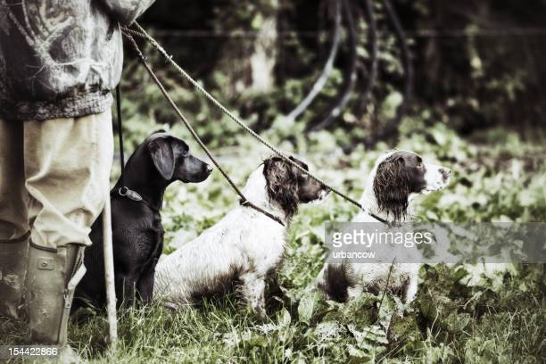 gamekeeperwith his three dogs - springer spaniel stock pictures, royalty-free photos & images