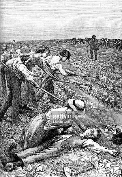 Gang system farming late 19th century illustration Division of slave labour used on plantations Boy has fainted from exhaustion