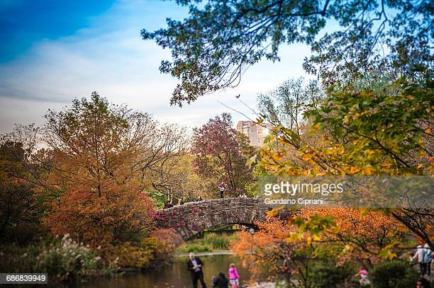 gapstow bridge in autumn in central park - cipriani manhattan stock pictures, royalty-free photos & images