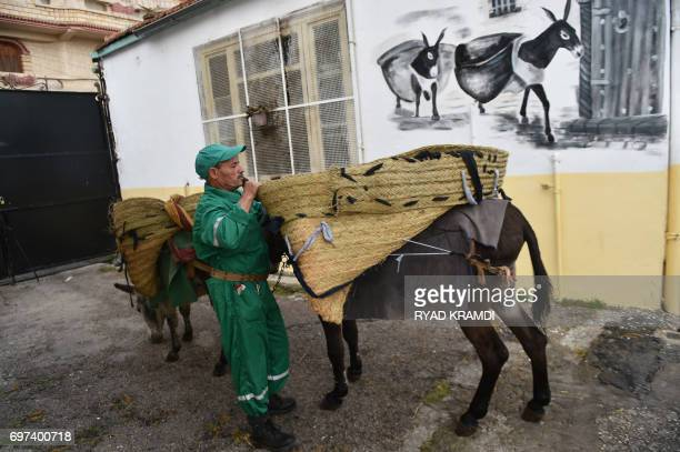 A garbage collector leads donkeys in the old part of Algiers known as the 'Kasbah' on May 22 2017 as they collect the rubbish in the alleyways of...