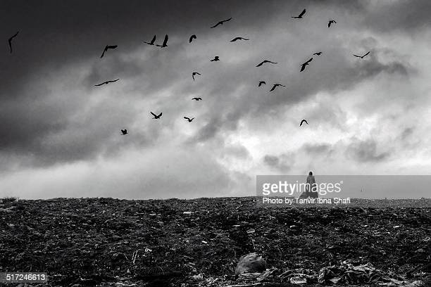 garbage dump - demra stock photos and pictures